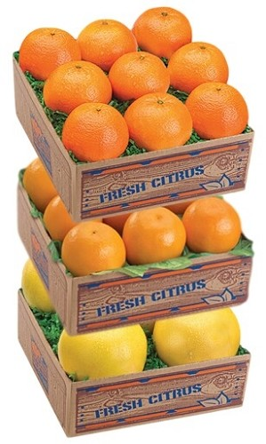 Spring Citrus Sampler - Temples, Honey Tangerines & Ruby Red Grapefruit Free Feb-Mar Shipping